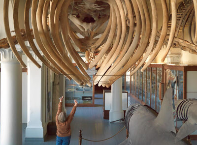 The Whale Gallery